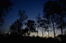 Aus-Willowbank-D850 258